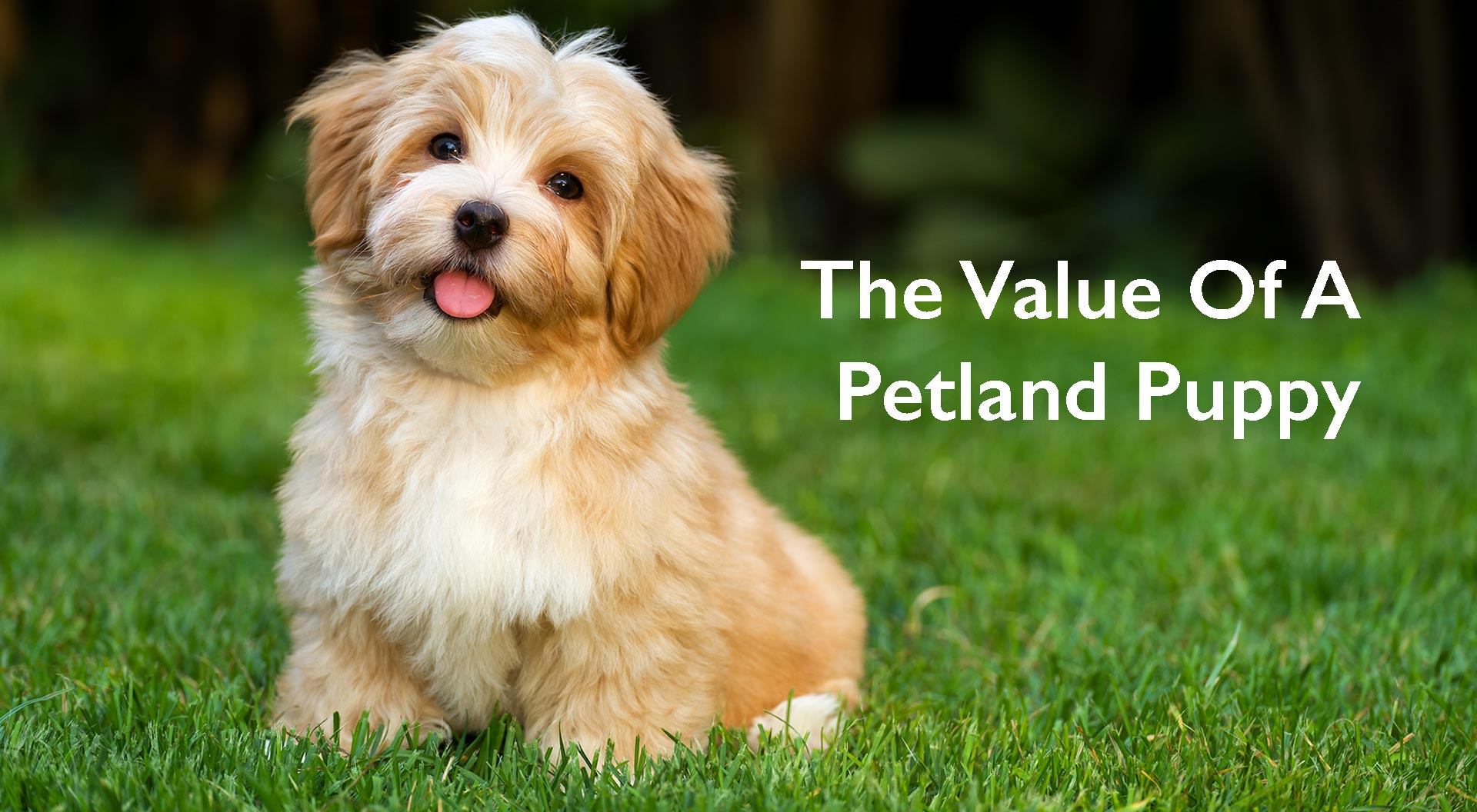 Petland Sarasota, Florida Value of a Petland Puppy